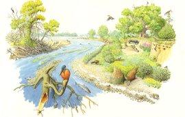 Rivierbosweide