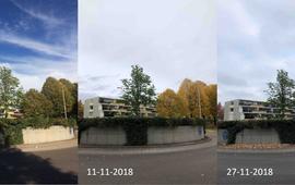 Lenteverschijnselen in de herfst bij een witte paardenkastanje op een rotonde in Ede
