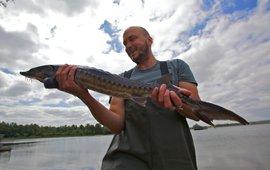 Bram Houben van ARK Natuurontwikkeling met een van de gezenderde steuren die zijn uitgezet in de Rijn