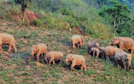 Een familie Aziatische olifanten in het Jiangcheng-gebied in Yunnan, China