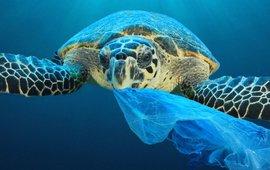 Schildpadden eten vaak plastic zakken, omdat ze die voor kwallen aanzien.