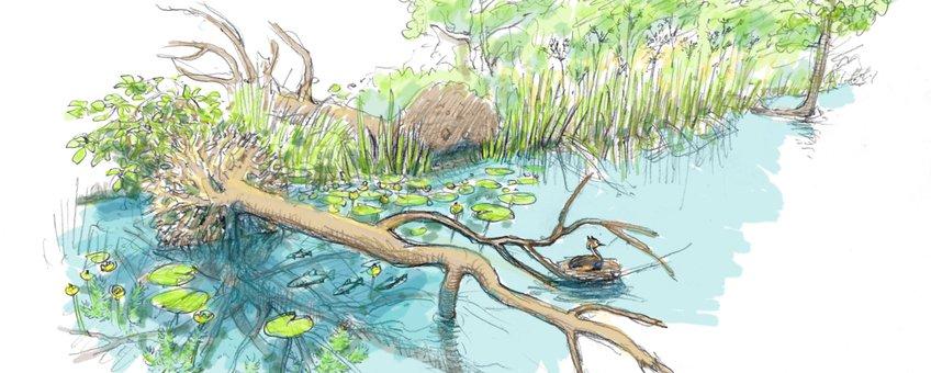 Tussen de takken van de dode bomen nestelen zich straks watervogels. EENMALIG GEBRUIK