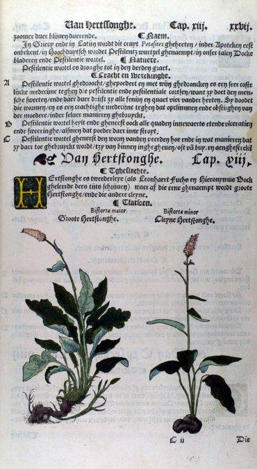 Pagina da Cruijdeboeck di Rembertus Dodoens (Dodonaeus)
