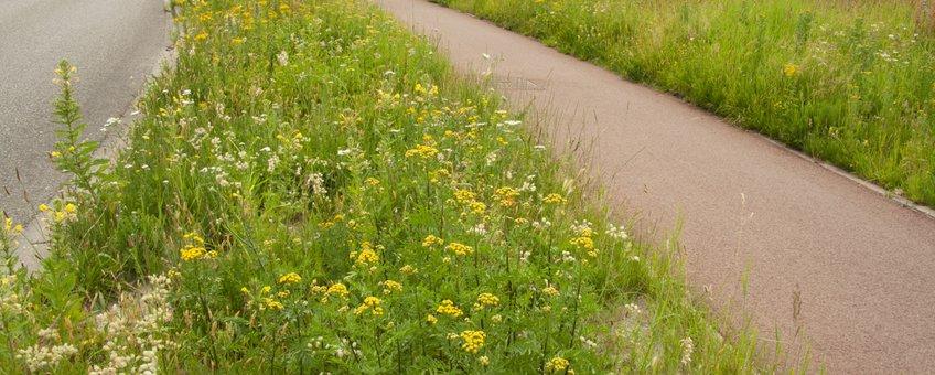 bloemrijk gras - primair