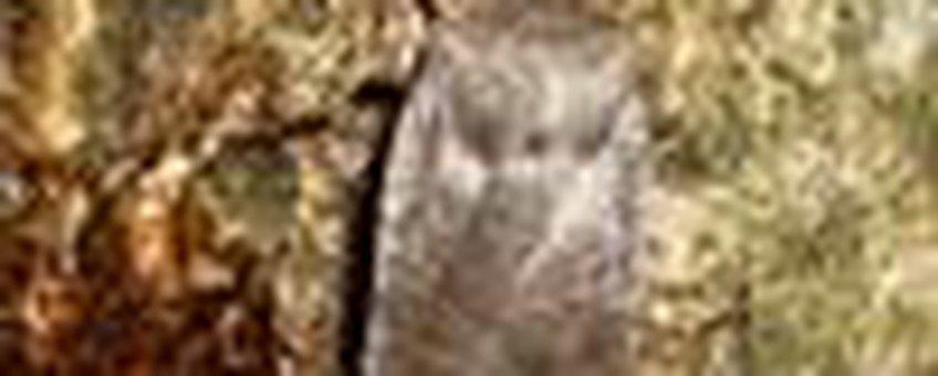 donkere winteruil klein