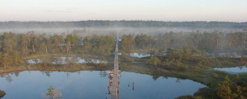 Een intact hoogveen in Estland