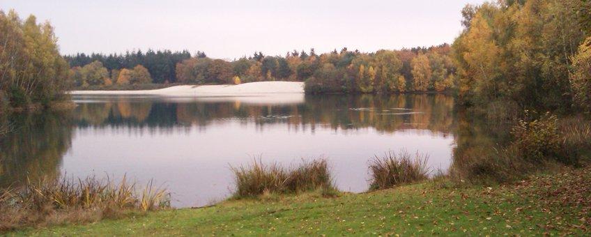 Landschap met bos en water