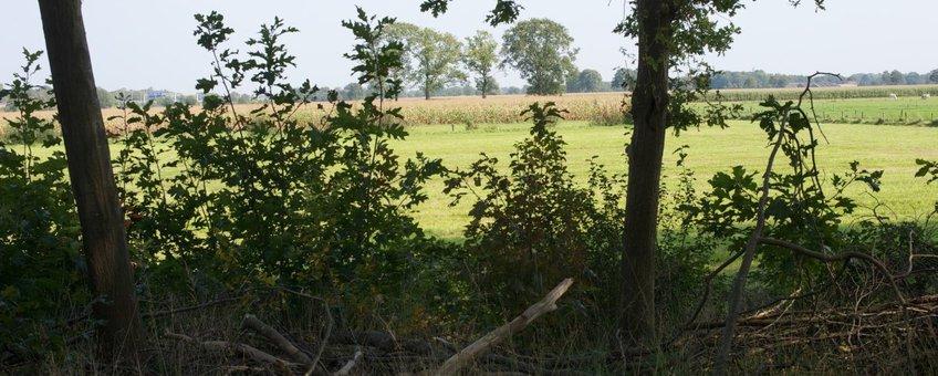Landschap ten zuiden van Apeldoorn