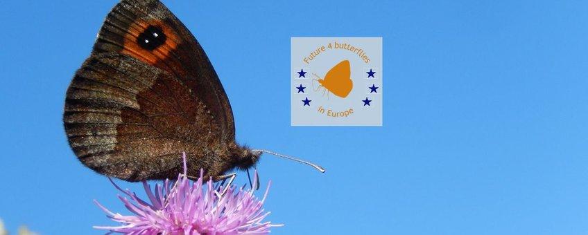 Future4Butterflies herfsterebia primair 4