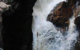 Een zalm zwemt een natuurlijke vistrap op.