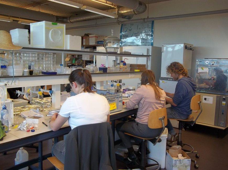 Muggenradar onderzoek, verwerken van ingestuurde muggen in het ecologische laboratorium van het Laboratorium voor Entomologie van Wageningen University
