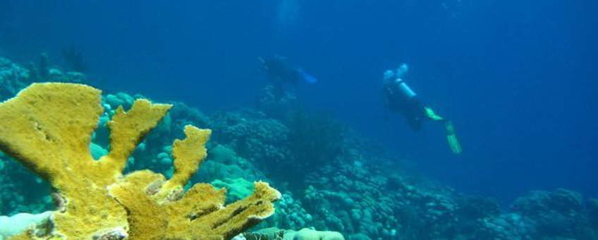 Eenmalig gebruik, Elkhorn Coral