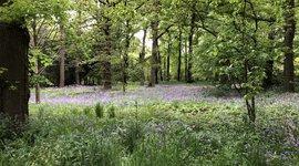 Botanische tuin Belmonte voorjaar bloei bos