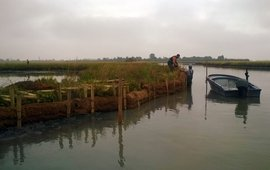 Local fishermen hired in the project place fascines to protect salt marsh edges from erosion