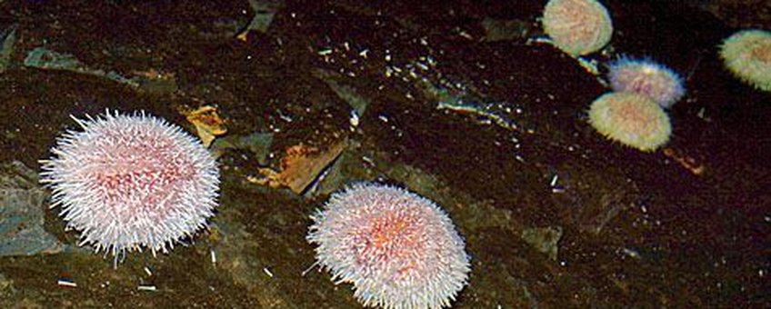 Kleurrijk zijn de zeeappels