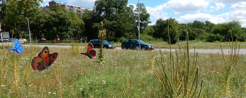 berm in Nijmegen met wat graslandvlinders