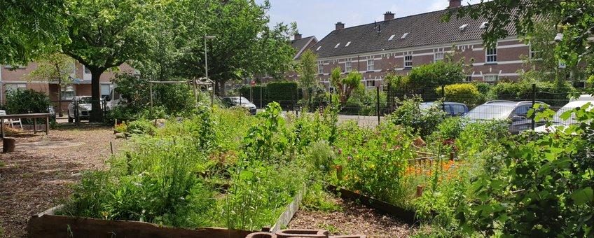 Tuintjes in de Schilderswijk in Den Haag