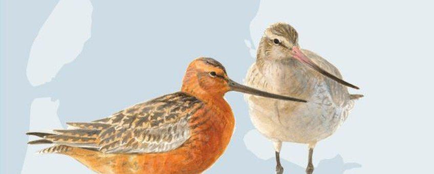 App Wadvogels. Vogels van het Waddengebied