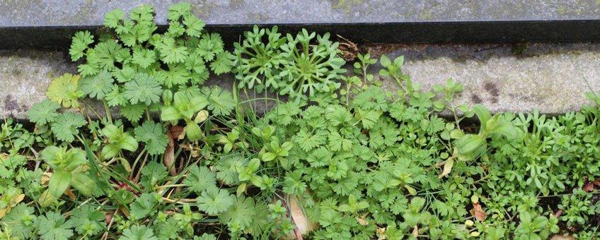 Planten bij grafsteen