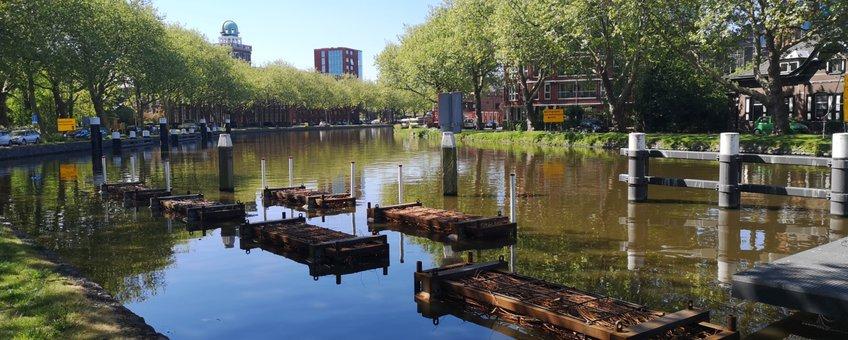 vissenbossen in de Delftse Schie