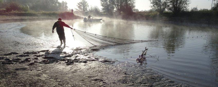Bemonstering van de visgemeenschap met een zegen van 75 meter
