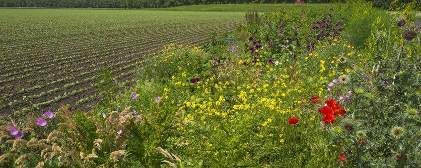 Voorbeeld bloemrijk bermbeheer