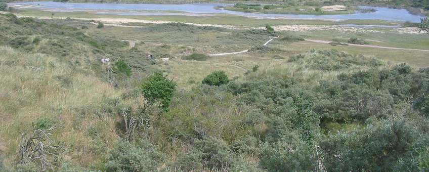 Duinen in Nationaal Park Zuid-Kennemerland