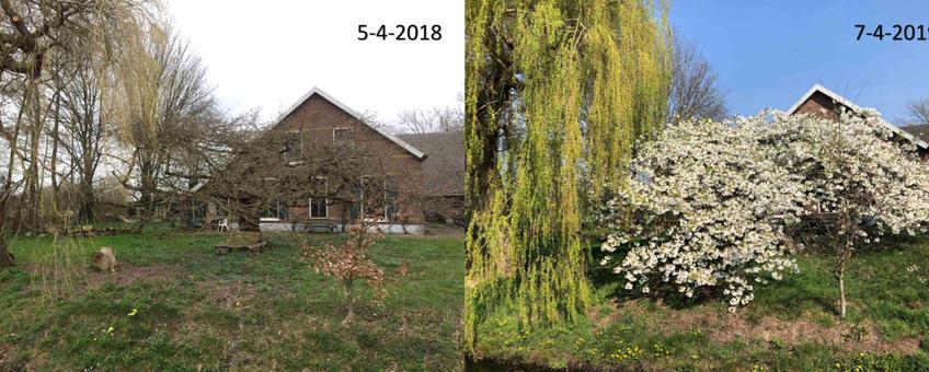 Verschil in ontwikkeling van een sierkers in Bennekom tussen 5 april 2018 en 7 april 2019
