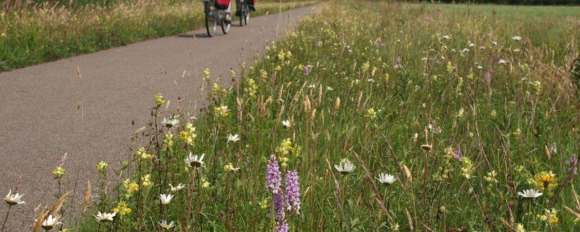 Een goed beheerde berm met orchideeën; een genot voor de fietser