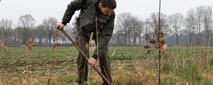 aanplant van jonge bomen in Drenthe