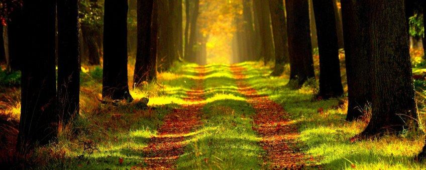 Herfstpad tussen bomen