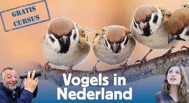 Aanmelden Vogelcursus
