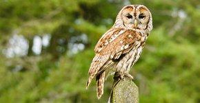 Bosuil / Shutterstock