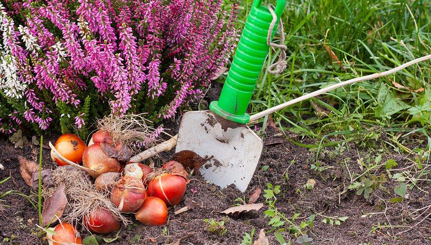 Bloembollen planten / Shutterstock