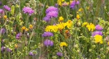 Wilde bloemen / Pixabay