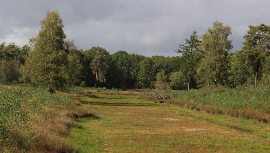Ven na langdurige droogte / Marc Scheurkogel