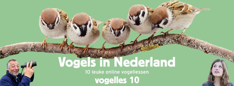 Vogels in Nederland - Vogelles 10