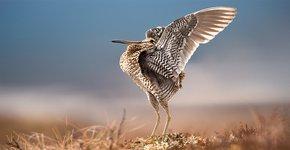 Poelsnip / Shutterstock