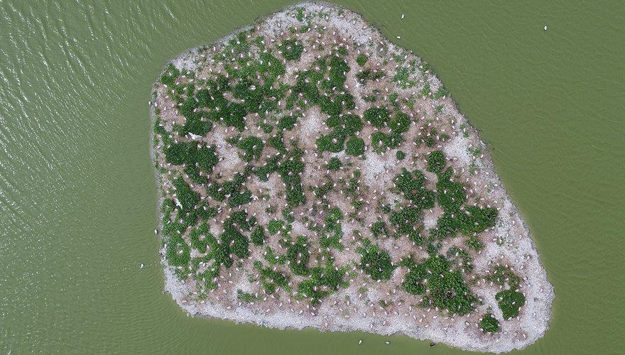 Kokmeeuwkolonie vanuit de lucht met drone / Fieldwork Company