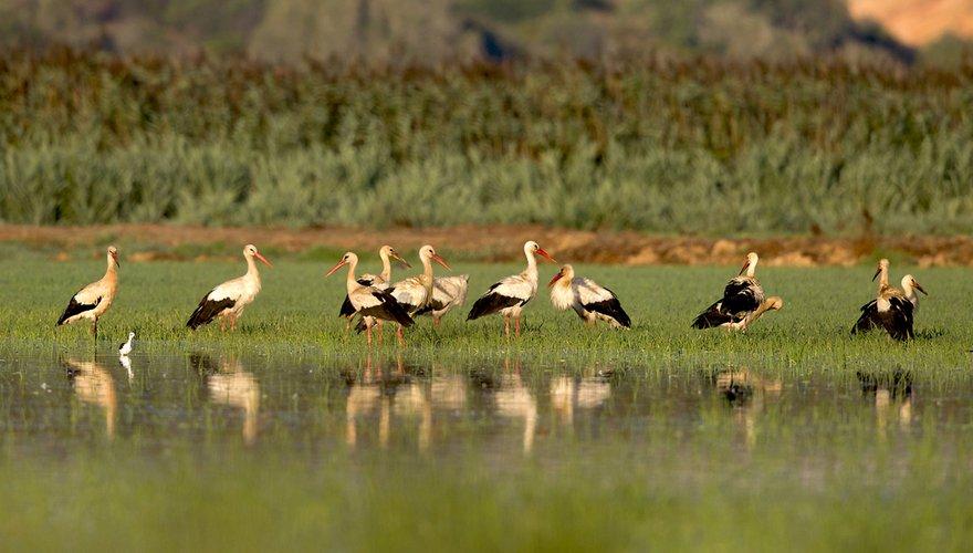Ooievaars in Portugal / Shutterstock