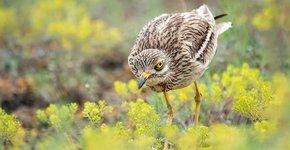 Griel / Shutterstock
