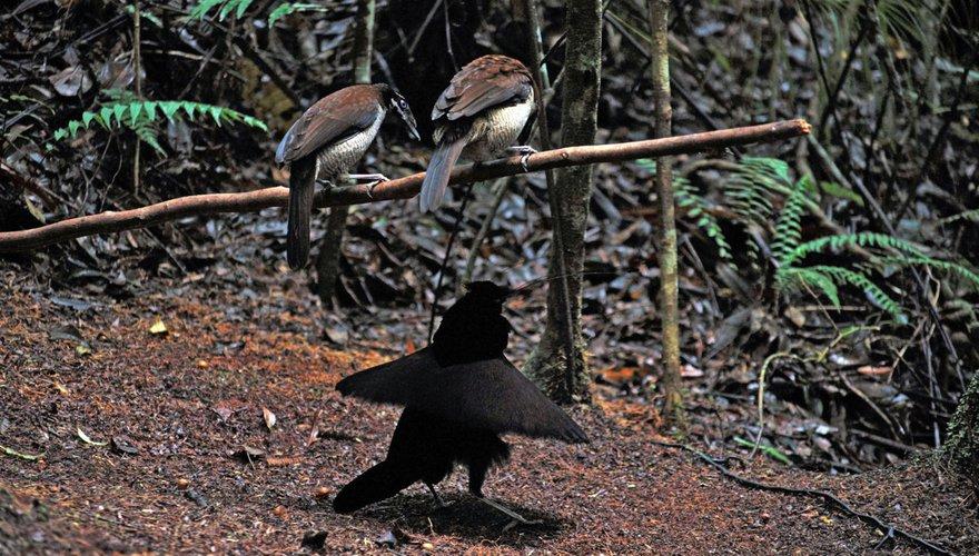 Paradijsvogels / Stella Roos Peters