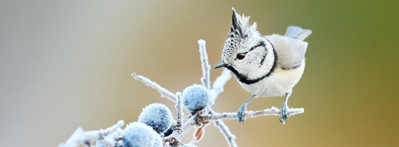 Kuifmees / Shutterstock