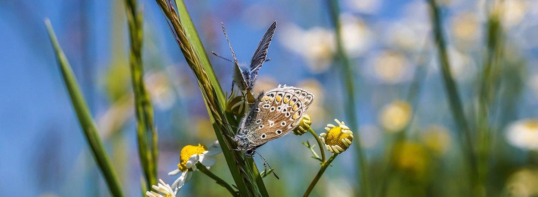 Vlinder / Pixabay