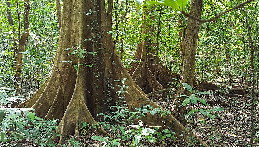 Tropisch woud / Hans Peeters