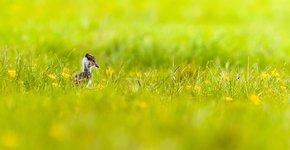 Kievitjong / Shutterstock
