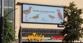 Campagne Vogels voorstellen