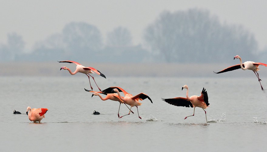 Europese en Chileense flamingo's / Jelle de Jong