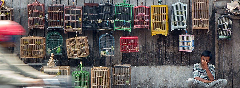 Rode lijst Indonesie / Peter Nijenhuis - Flickr