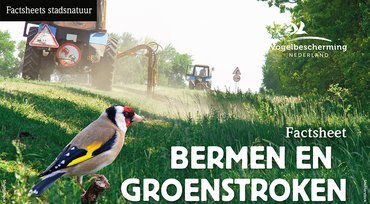 Download factsheet bermen en groenstroken